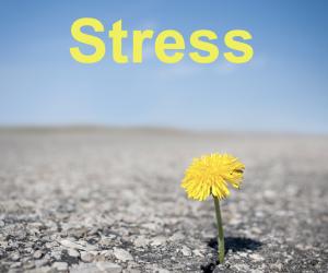 TT stress p1